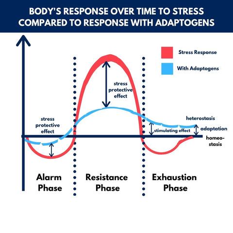 Body's response over time to stress compared to response with adaptogens