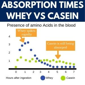 Graph of whey protein being absorbed more quickly than casein over time