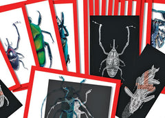 Insect X-Rays and Picture Cards Set