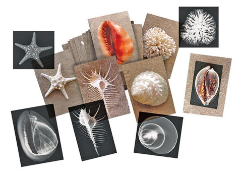 Shell X-Rays and Picture Cards Set