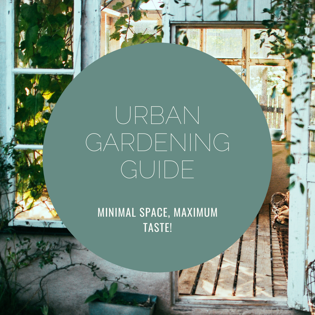 A beginner's guide to Urban Gardening