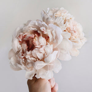 Sugar Flower Peony (Paeonia lactiflora 'Pillow Talk') - Cake Topper