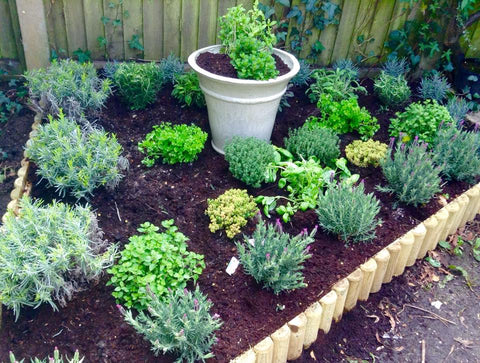 Herb Garden - the new project