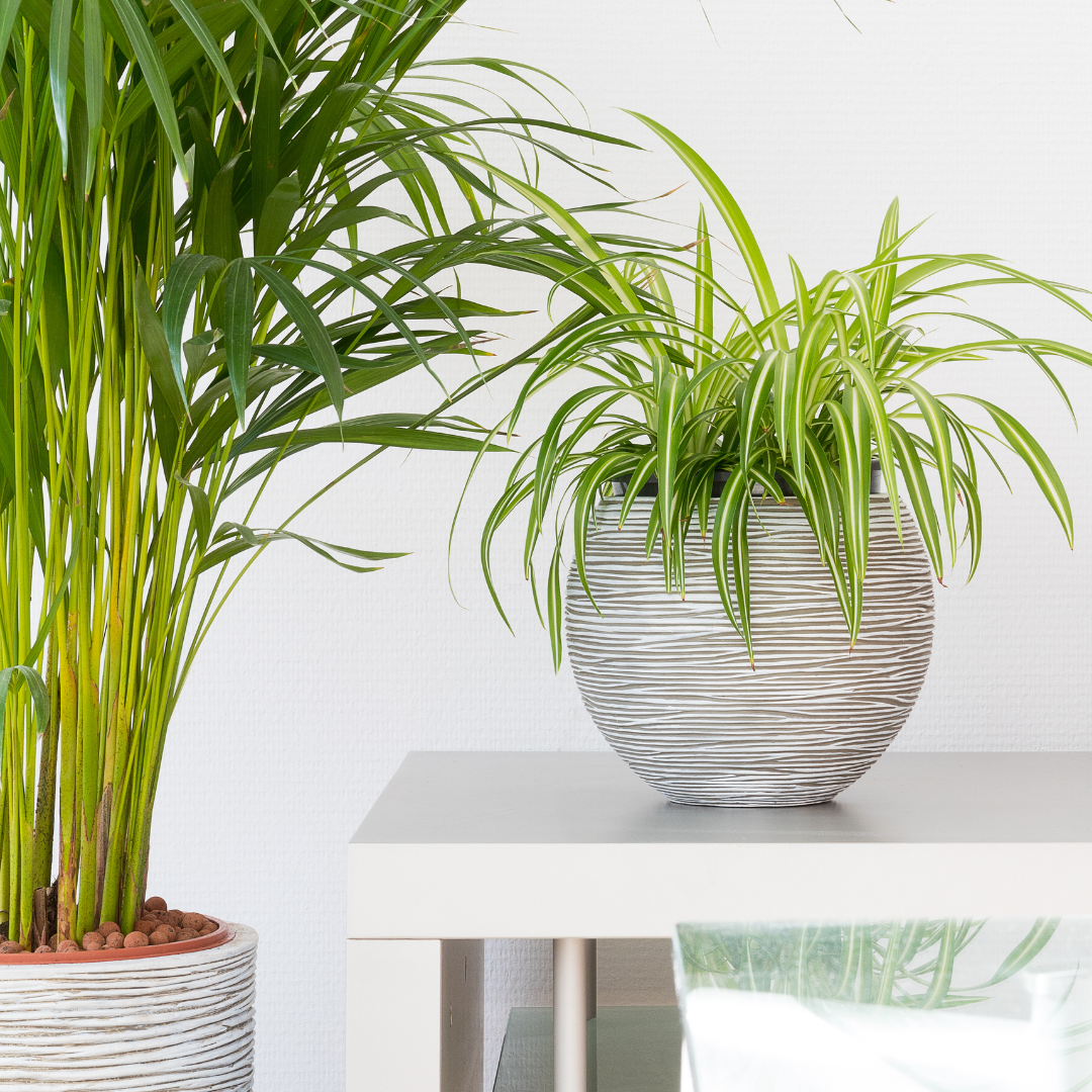 Your Guide to Indoor Plants: 5 Unique (and Easy) Picks
