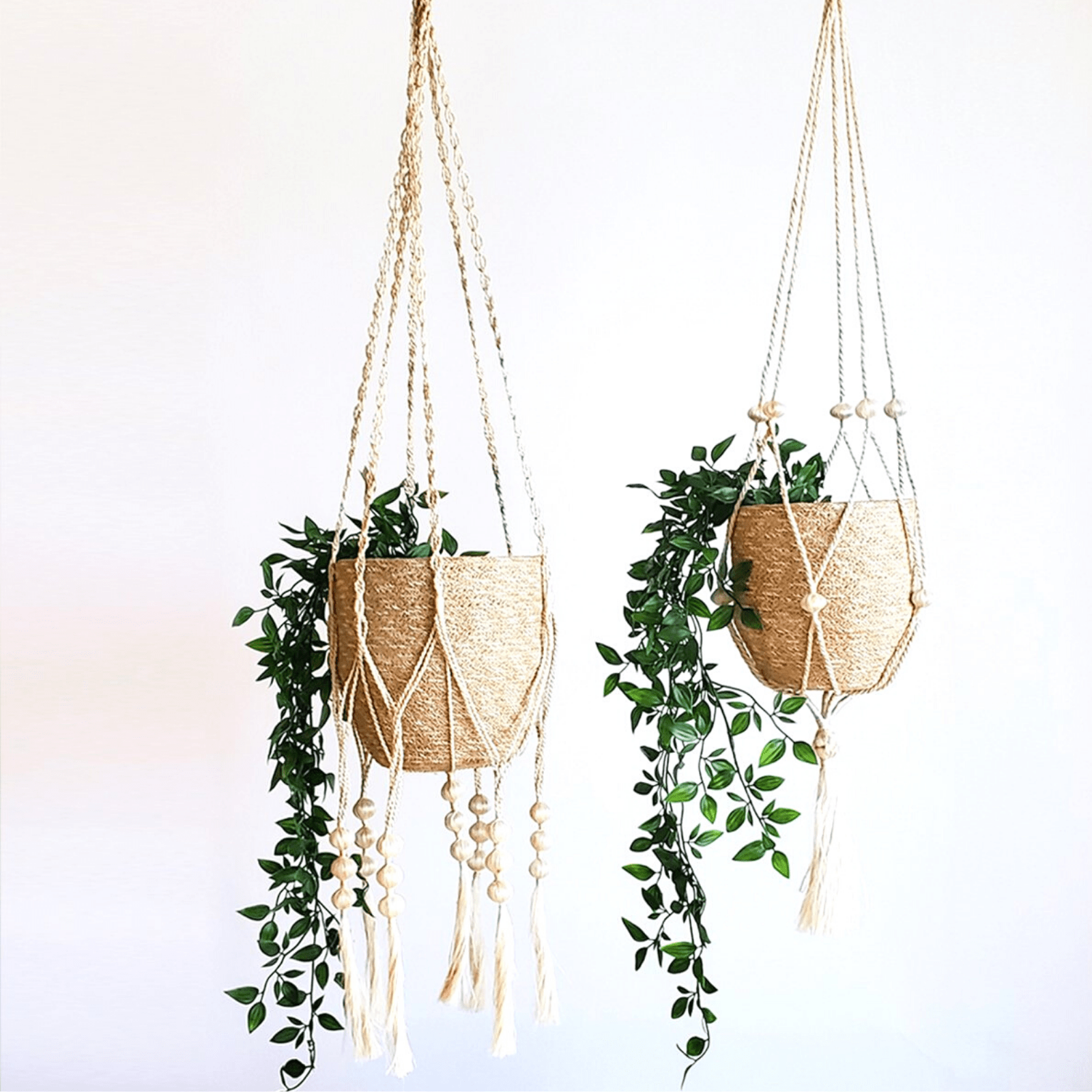 Hanging plants on white background