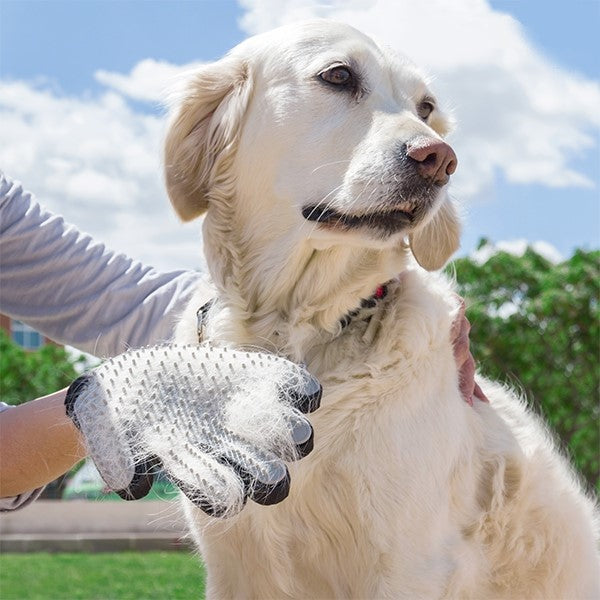 Brush & Massage Glove For Pet