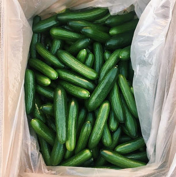 Organic English Cucumbers - 1 Pound - LOCAL