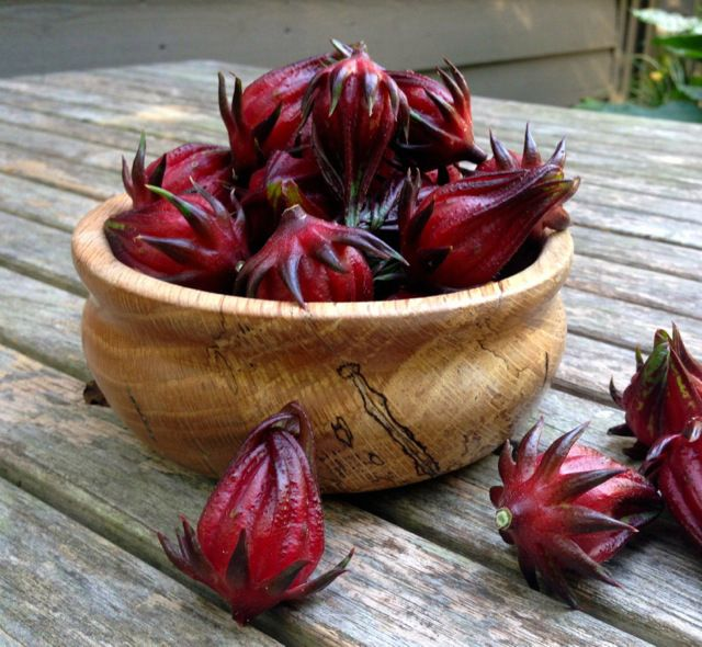 Organic Roselle - 1/3 Pound - LOCAL - Frog Song Organics
