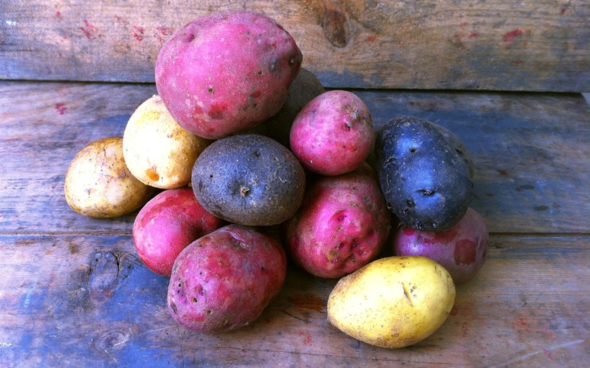 Organic Tri-Color Potatoes - 1 Pound - LOCAL - Frog Song Organics