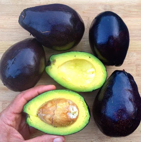 3 ct Organic Avocados - LOCAL - Mexicola Avocado with Edible Skin!