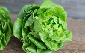 Organic Boston Lettuce - Local - Pure Produce