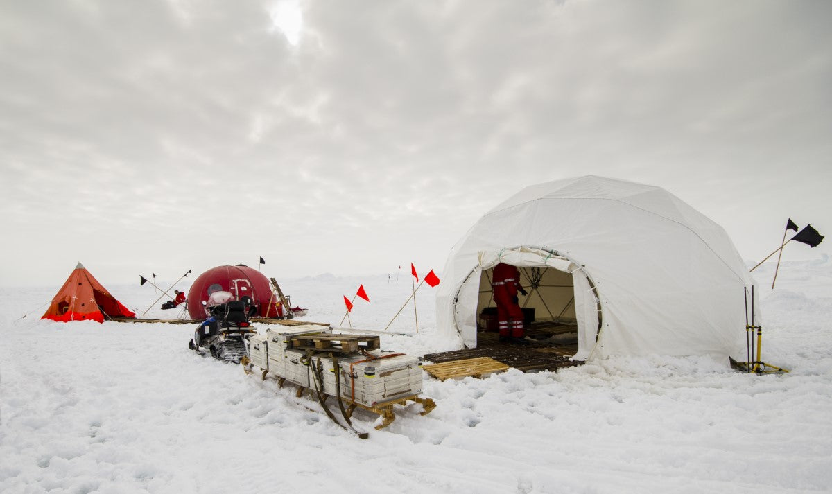 Biologist: Keeping Warm in the Arctic Ecosystem