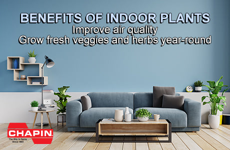 Indoor gardening - couch in room with plants - improves air quality and grow fresh veggies and herbs year-round