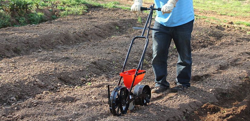 Garden seeder in use