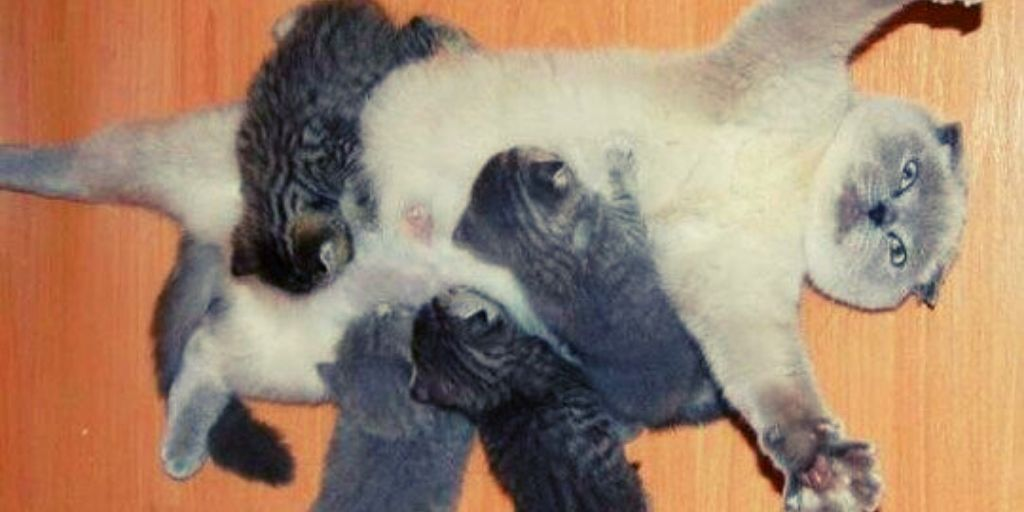 Mother Cat Perfectly Summarizes Breastfeeding For Mums
