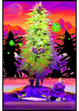 WEED GNOMES BLACK LIGHT POSTER