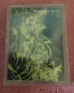 1994 INLINE HEMP TRADING CARDS SERIES 1 UNOPENED BOX - RARE