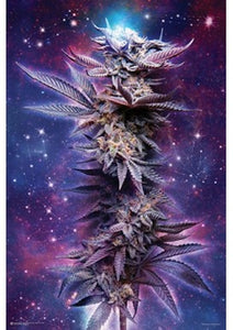 SPACED OUT CANNABIS FLOWER POSTER