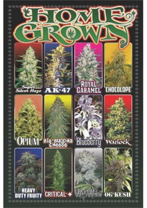 HOME GROWN STRAIN POSTER