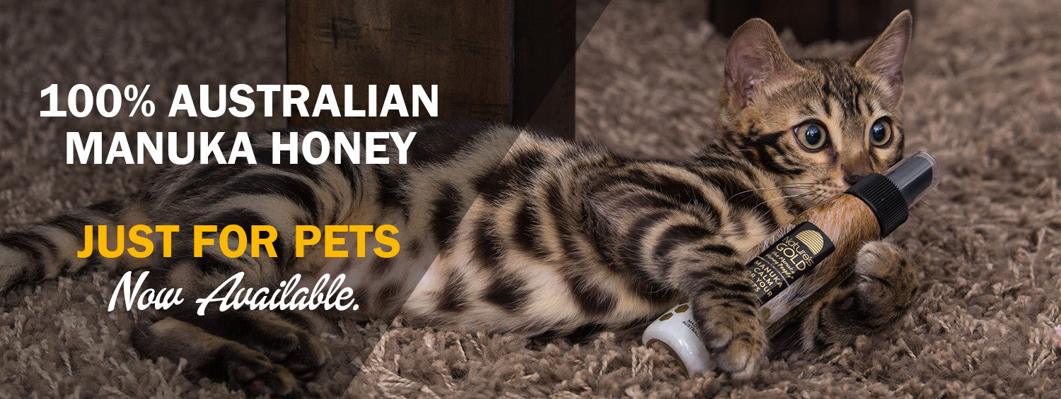 Manuka honey for pets