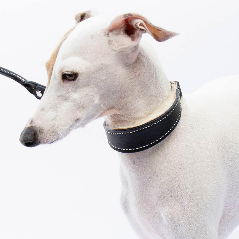 Italian Greyhound Black Leather Wool-lined Martingale Collar