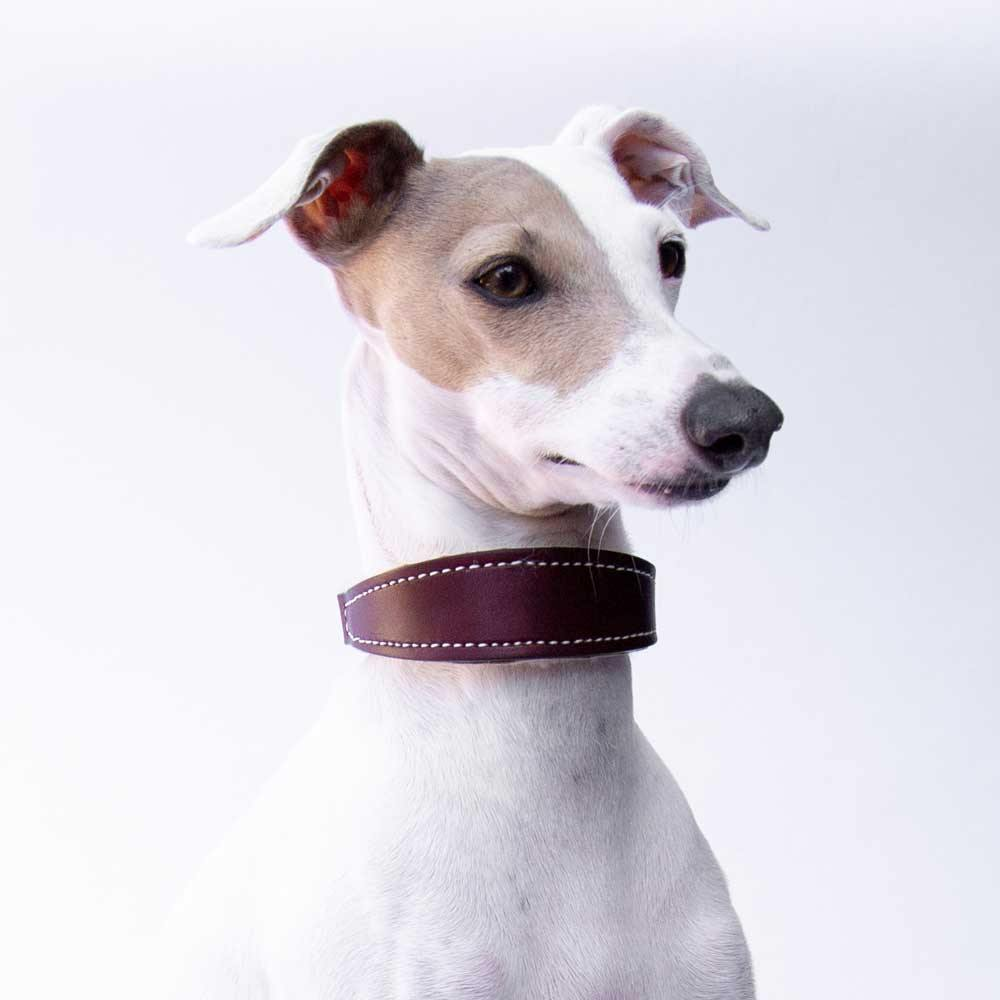 Small Burgundy Leather Wool-lined Martingale Collar for Italian Greyhounds - IGGY DOGWEAR