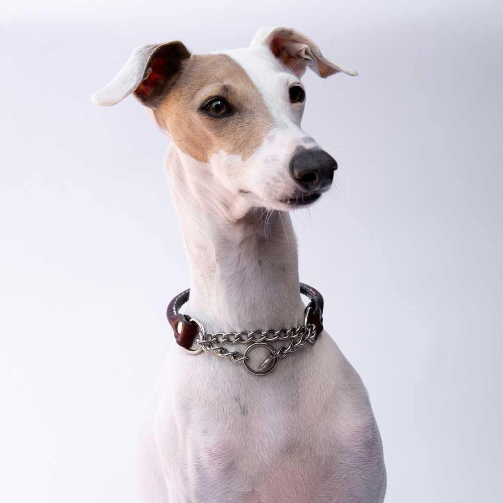 Small Burgundy Rolled Leather Martingale Collar for Italian Greyhounds - IGGY DOGWEAR