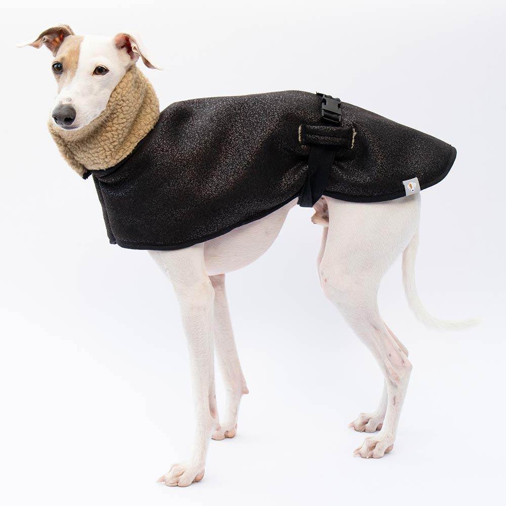 Italian Greyhound Aviator Coat Standing Rufio