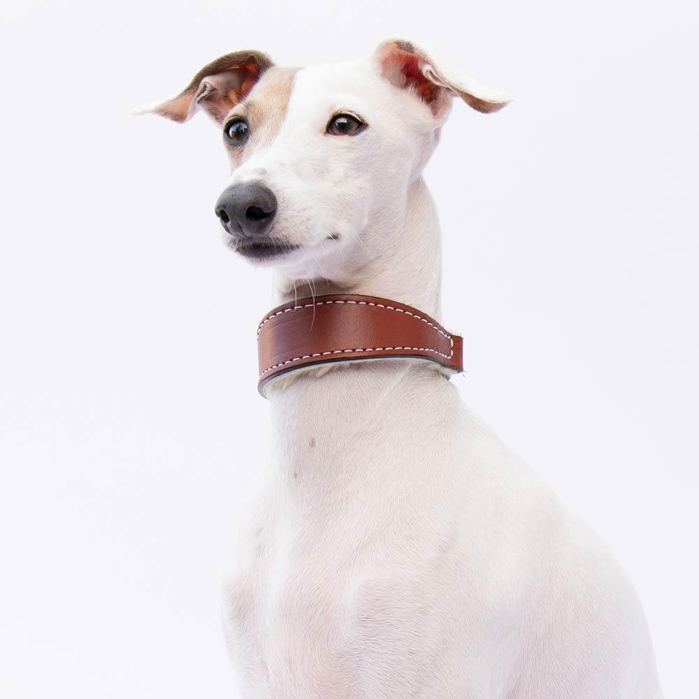Small Tan Leather Wool-lined Martingale Collar for Italian Greyhounds - IGGY DOGWEAR