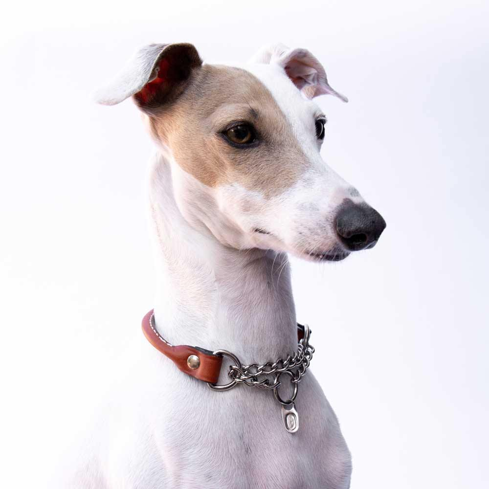 Italian Greyhound Tan Rolled Leather Martingale Collar Model Rufio