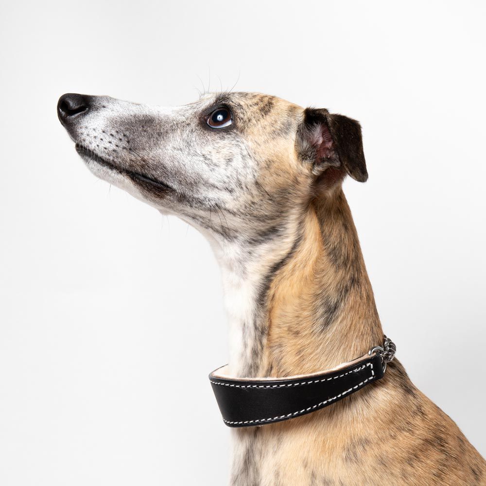 Medium Black Leather Wool-lined Martingale Collar for Whippets & Large Italian Greyhounds