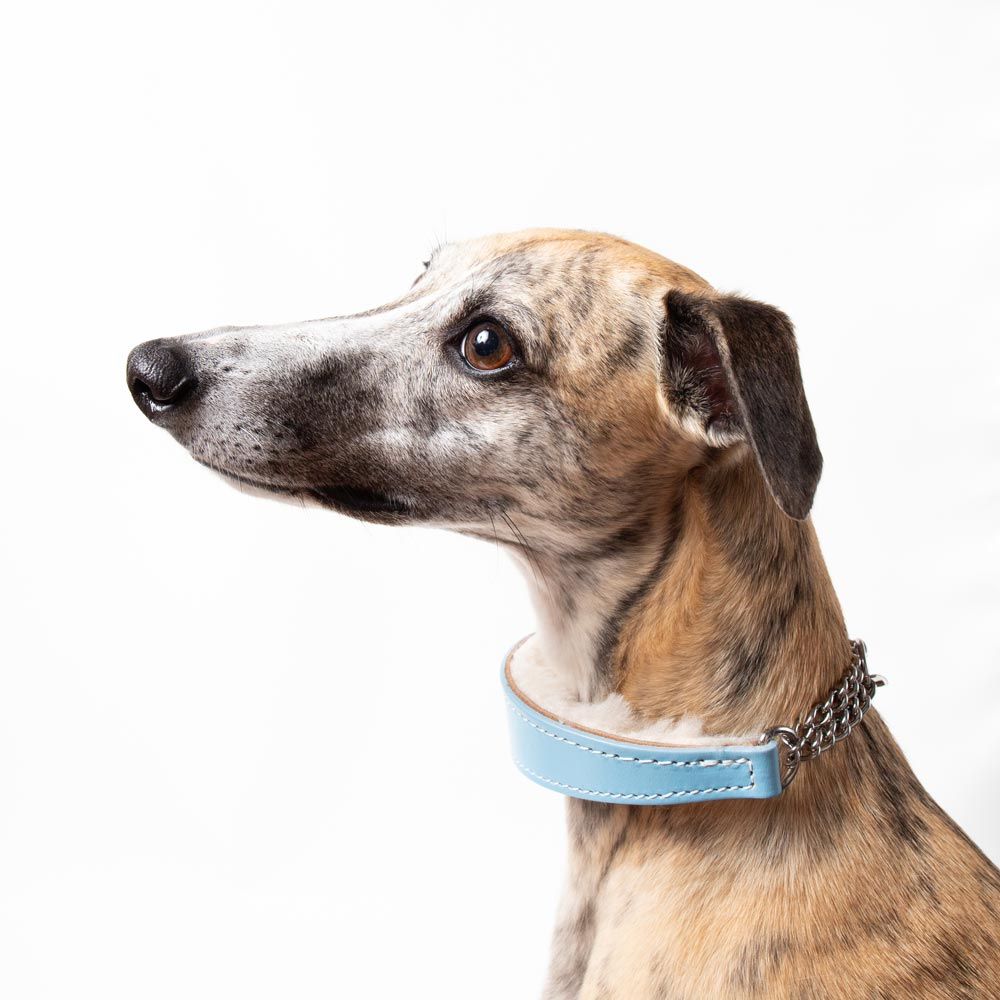 Medium Blue Leather Wool-lined Martingale Collar for Whippets & Large Italian Greyhounds
