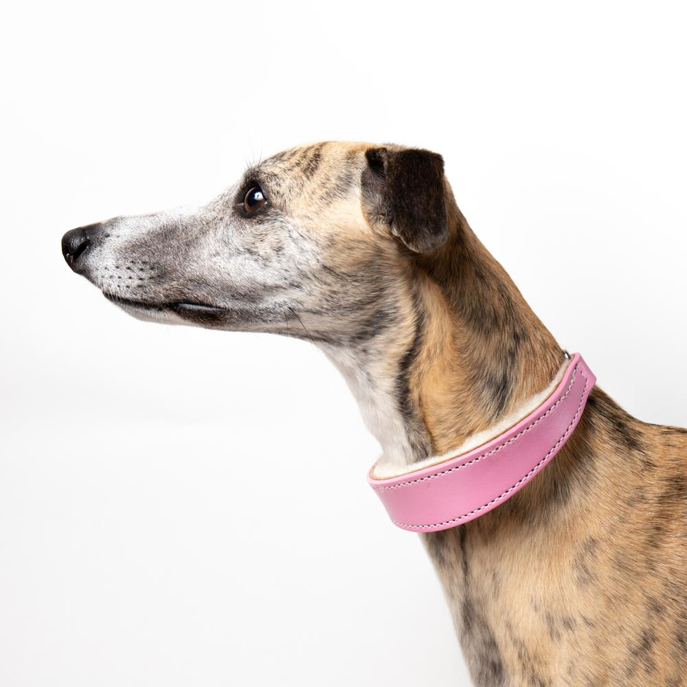 Medium Pink Leather Wool-lined Martingale Collar for Whippets & Large Italian Greyhounds