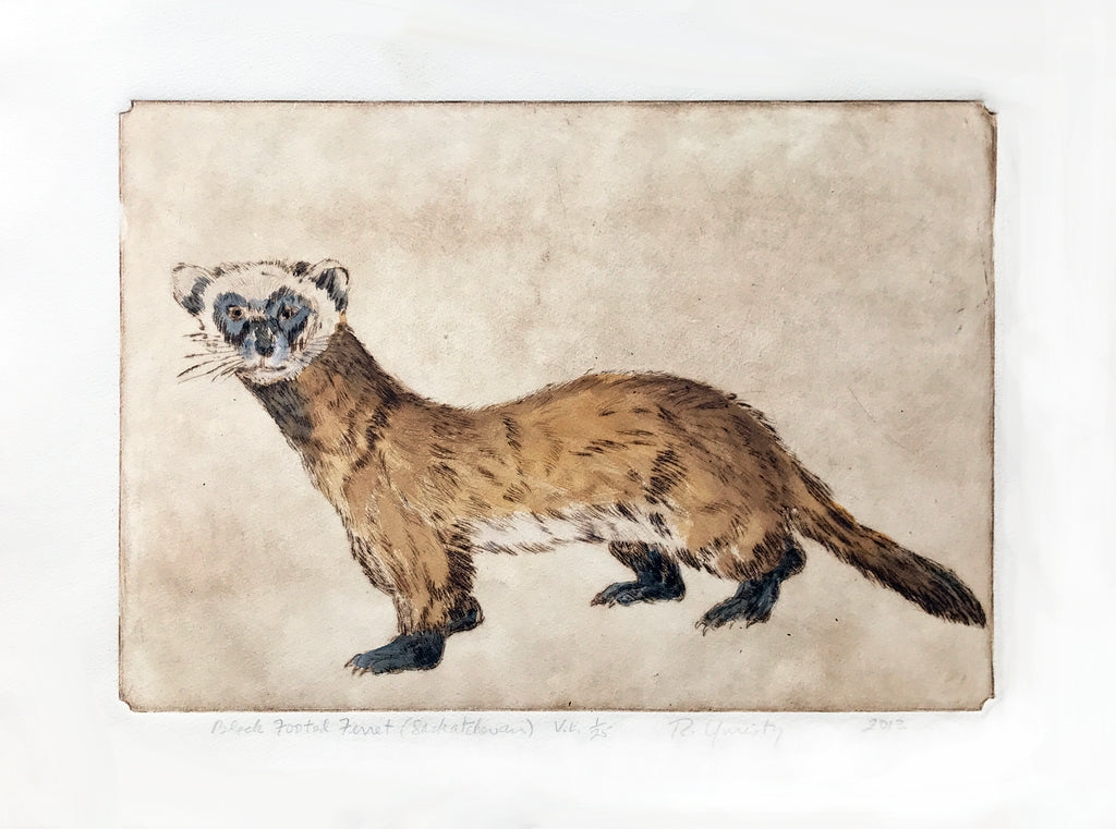 Black Footed Ferret V.E.