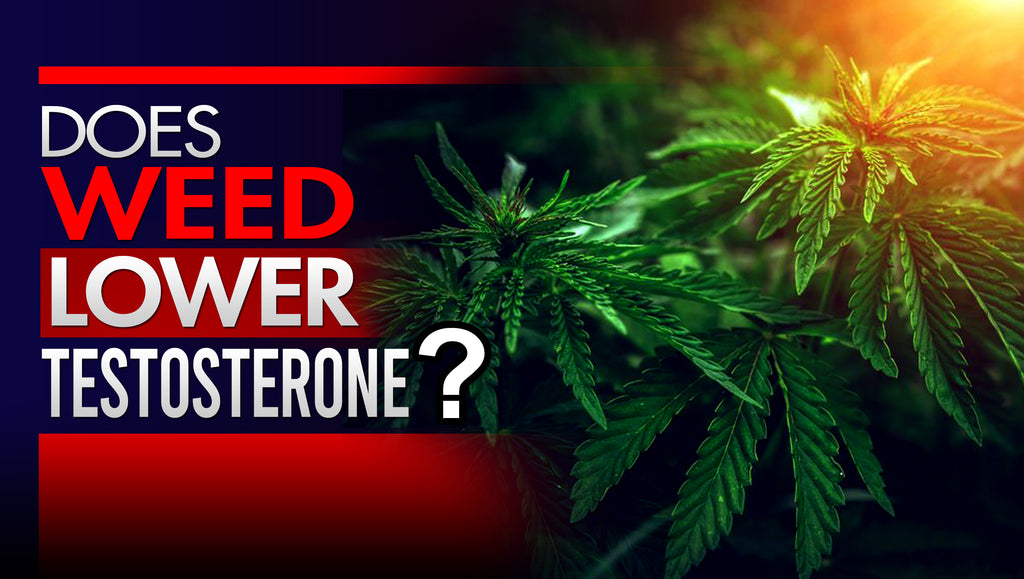 Does Smoking Weed Lower Testosterone?