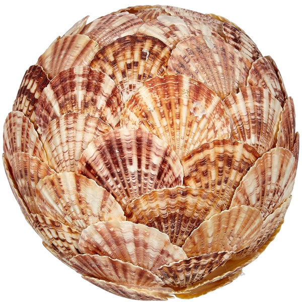 "Decorative Pecten Lentigious Flat Shell Orb 6"", Nautical Decor Table Top Centerpiece"