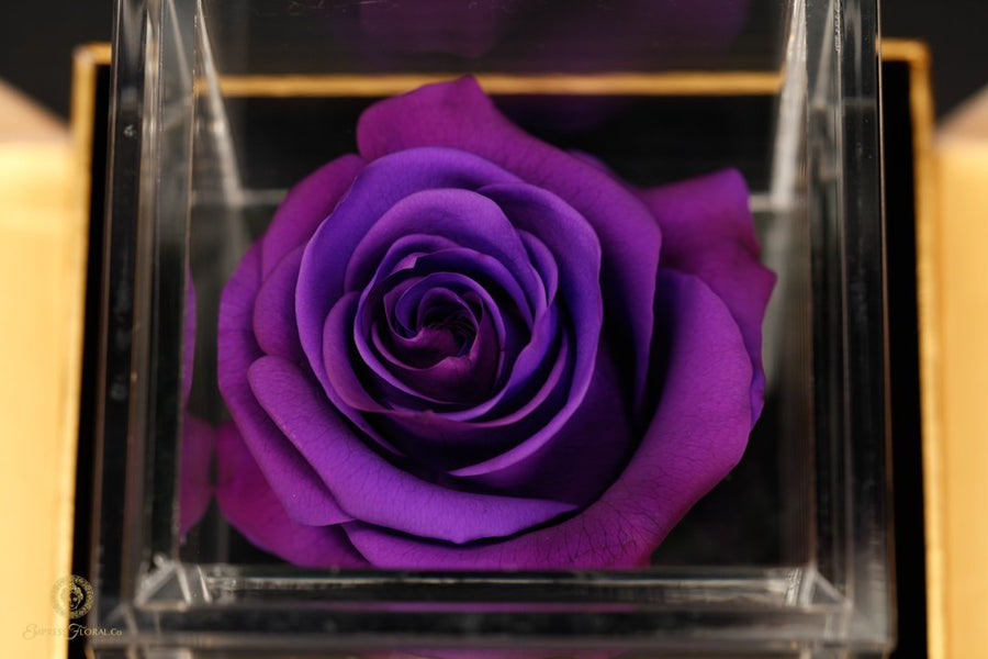 February Flower Of The Month is the incredible Violet Amethyst Rose!