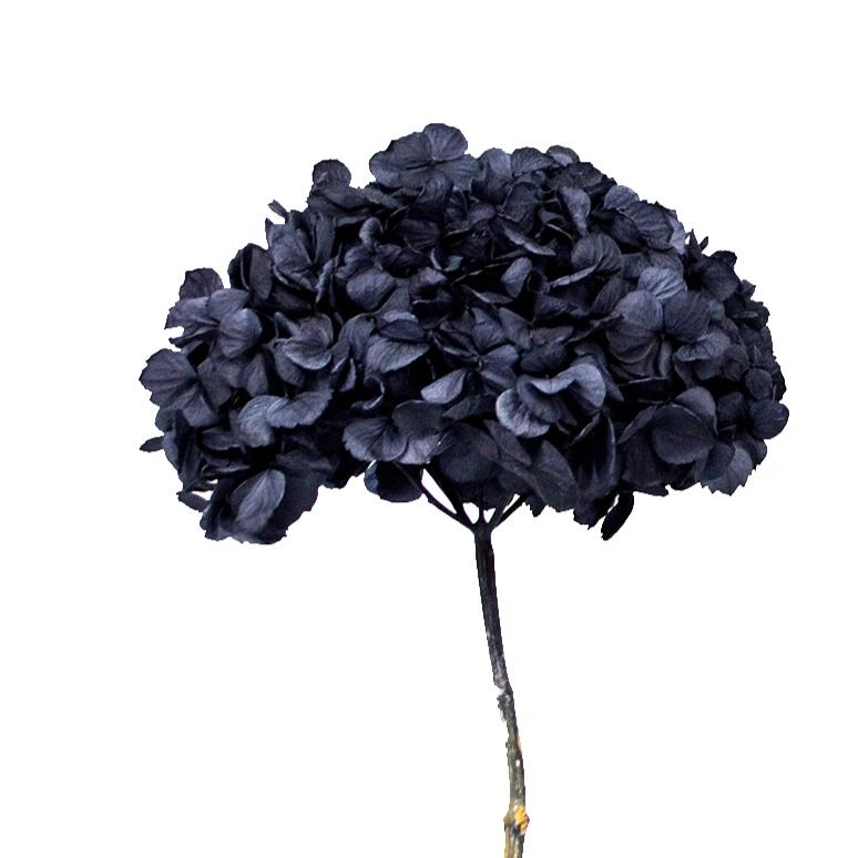 Night Black Hydrangea Preserved to stay beautiful for 1 year or more