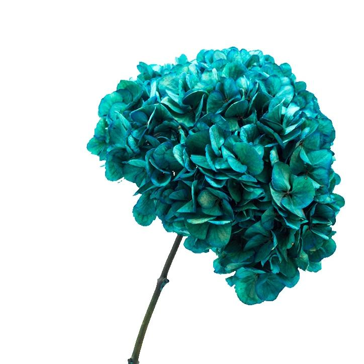 Euphoric Blue Hydrangea Preserved to stay beautiful for 1 year or more