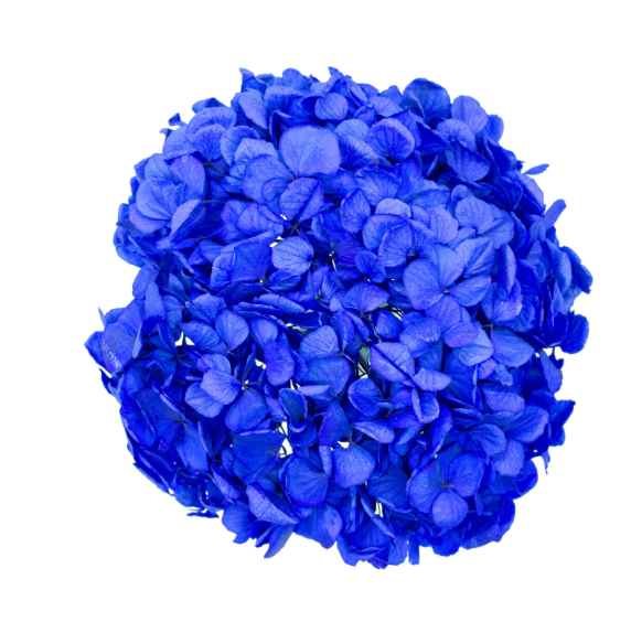 Starlight Blue Hydrangea  Preserved to stay beautiful for 1 year or more