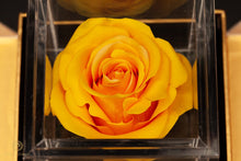 Load image into Gallery viewer, Empress Flora Single Honey Yellow Rose in an Acrylic Box