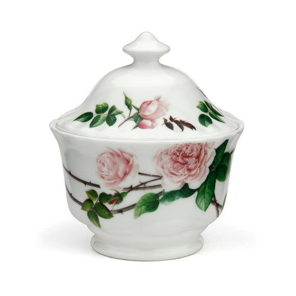イングリッシュローズ シュガーボール - English Rose Sugar Bowl - david-austin-roses-japan
