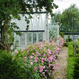 ハーロウ・カー裸苗 - Harlow Carr (Aushouse) - david-austin-roses-japan