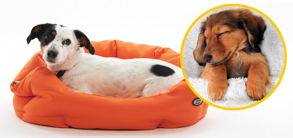 How to Choose the Perfect Bed for Your Dog