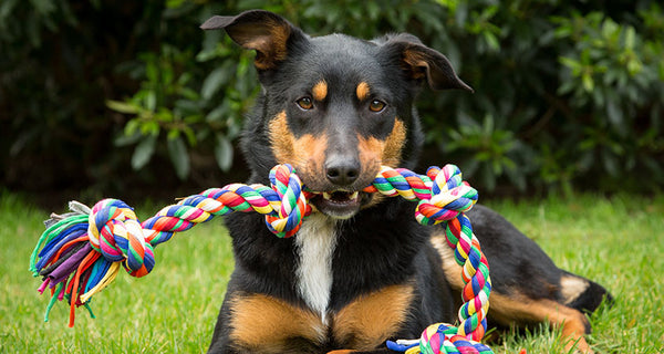How to pick the best and safest dog toys