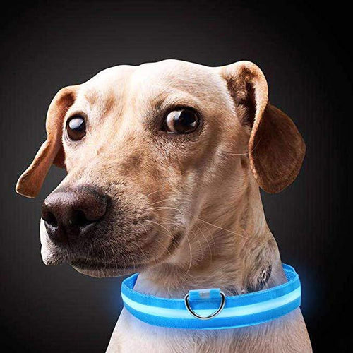 SAFE DOG™ USB LED COLLAR - Dog-Supplies-Accessories