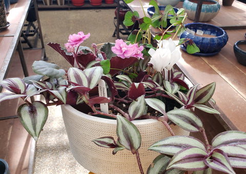 Home delivery for plants for potted arrangement