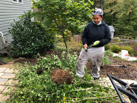 Rose of Sharon removal