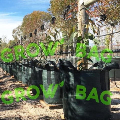 25 gallon grow bag with 2 handles