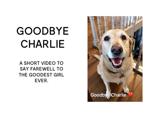 Goodbye to Charlie the Labrador Video from Designer Stacy Chan